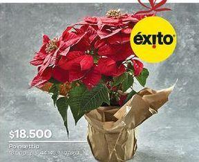 Oferta de Flores por $18500